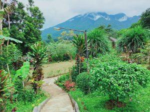 Jalur ke area villa kebun dan empang